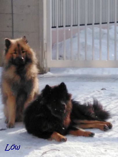 25.1.2019 - Das Eurasier Duo