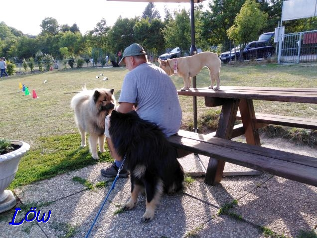 17.7.2019 - Dwix, Howard und Gina beim Rally Obedience